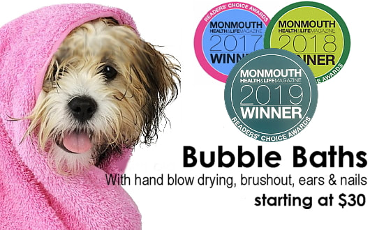 The Dog Spaw - Salon & Mobile Grooming in Monmouth County
